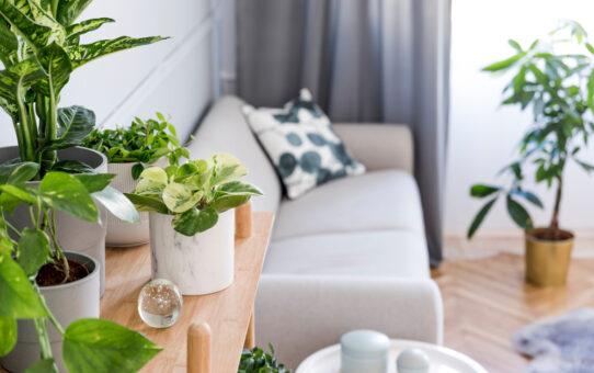 Een mooie kunstplant in huis